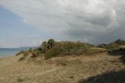 juniperus2
