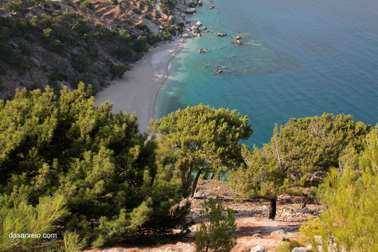 Παραλία 'Απελλα, το πευκοδάσος φτάνει μέχρι την θάλασσα