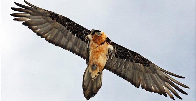 Λατίνες σαν μεγάλο πουλί