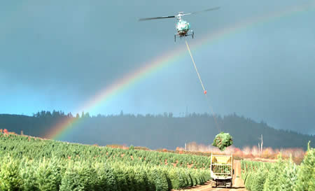 Helicopter_Christmas_Tree_Harvest