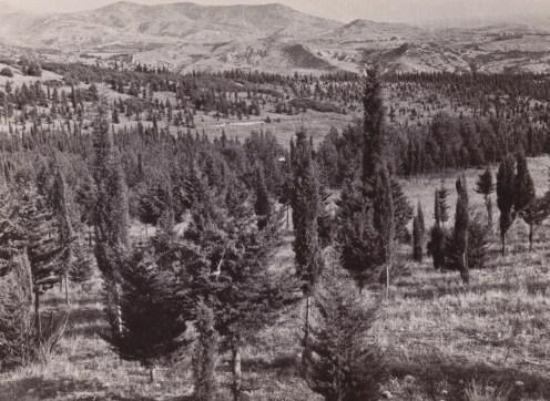 Νέα δάση στη χώρα προπολεμικά (από το αρχείο του συγγραφέα)