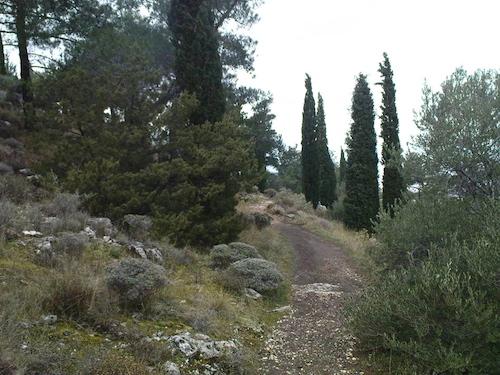 Το μεσογειακό φυσικό οικοσύστημα του λόφου Φιλοππάπου (από το αρχείο του συγγραφέα)