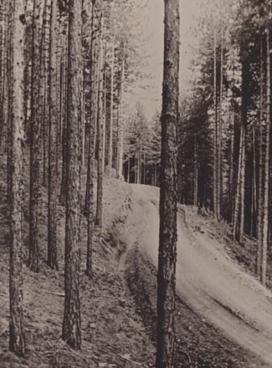 Δάσος μαύρης πεύκης στην ορεινή Πίνδο το 1955 (από το αρχείο του συγγραφέα)