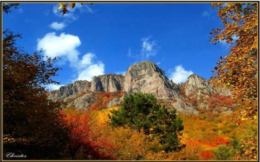 Δάσος Φρακτού στο Νομό Δράμας (φωτογραφία από το διαδίκτυο)