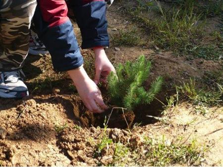 Παιδικά χέρια φυτεύουν...