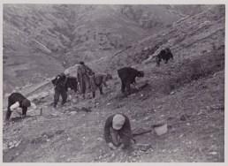 Αναδασώσεις της δασικής υπηρεσίας επί επικλινών εδαφών κατά το Μεσοπόλεμο (αρχείο Αντώνιου Β. Καπετάνιου)