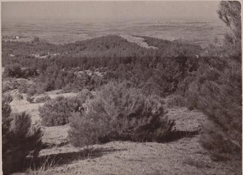 Αποκατάσταση υπερβοσκημένων εδαφών με τεχνητή αναδάσωσή τους που πραγματοποιήθηκε κατά τα έτη 1938-1939 στο νομό Τρικάλων, (φωτογραφία έτους 1954, από το αρχείο του συγγραφέα).