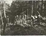 Συγκέντρωση υπολειμμάτων, καθαρισμός δάσους