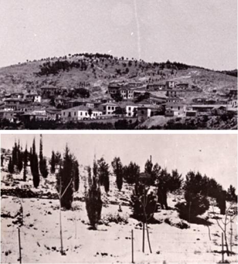 Αναδασώσεις από σχολεία και τη δασική υπηρεσία στους ξηρούς λόφους της Ελασσόνας και των Ιωαννίνων πριν από τον πόλεμο.