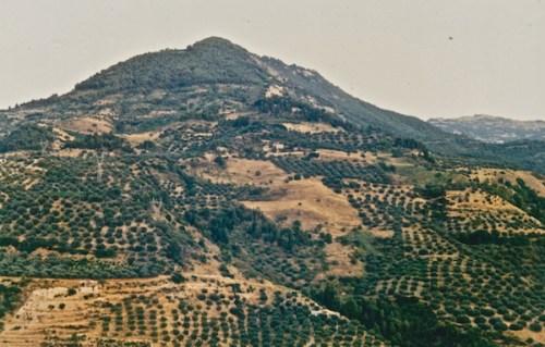 Τα (πευκο)δάση υποχώρησαν στην κορυφή του βουνού, επειδή οι εκτάσεις που καλύπτονταν από αυτά –ολάκερες πλαγιές!– αποδόθηκαν για γεωργική χρήση κι εκχερσώθηκαν (από το αρχείο του συγγραφέα).