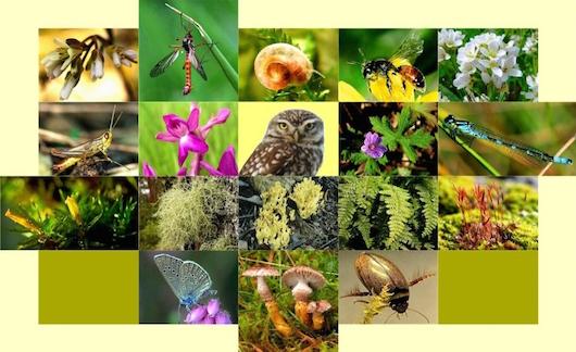 viopoikilotita biodiversity