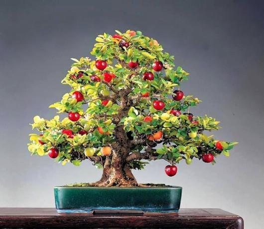 apple_bonsai