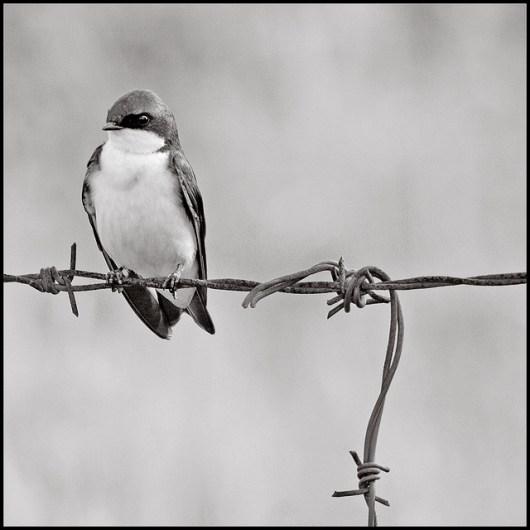 bird_w