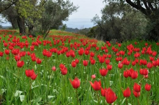 Θολοποτάμι, Χίος