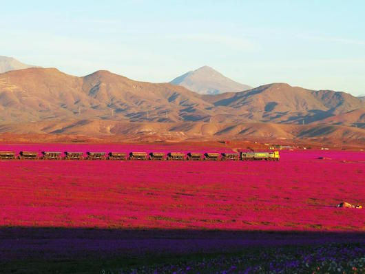 cargo-train-atacama-blooms