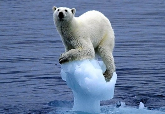 climate-change-ice-bear