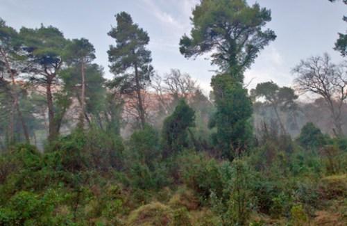 Δάσος Τατοΐου