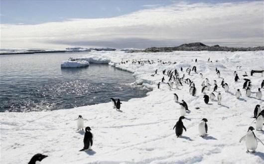 antarktiki-pigkouinoi