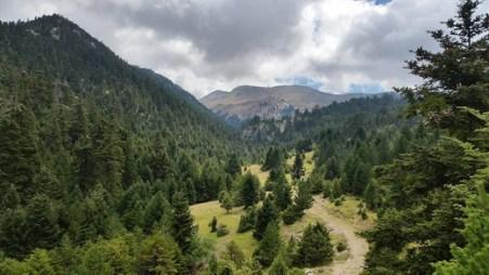 Αποτέλεσμα εικόνας για Ο Δ/ντής Δασών Φωκίδας