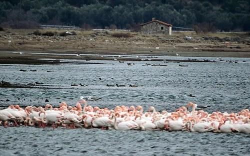 flamingko-lesbos