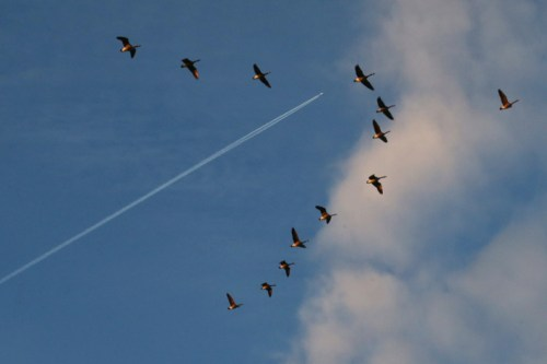 xines_aeroplano