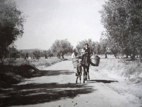 Πολλά τα παιδιά, μα όμορφα τα βόλεψε η μάνα πα στο ζώο για τη μεταφορά τους. Μόνο ένα μπροστά κατευθύνει το ζώο. Πελοπόννησος 1960.