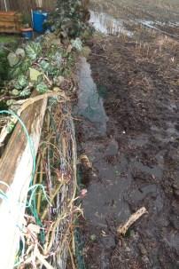 Ein groesserer Graben vor einem mit Efeu bewachsenen Holzzaun. In dem Graben steht das Wasser bis oben hin und auch im Hintergrund sieht man ein ueberflutetes Feld
