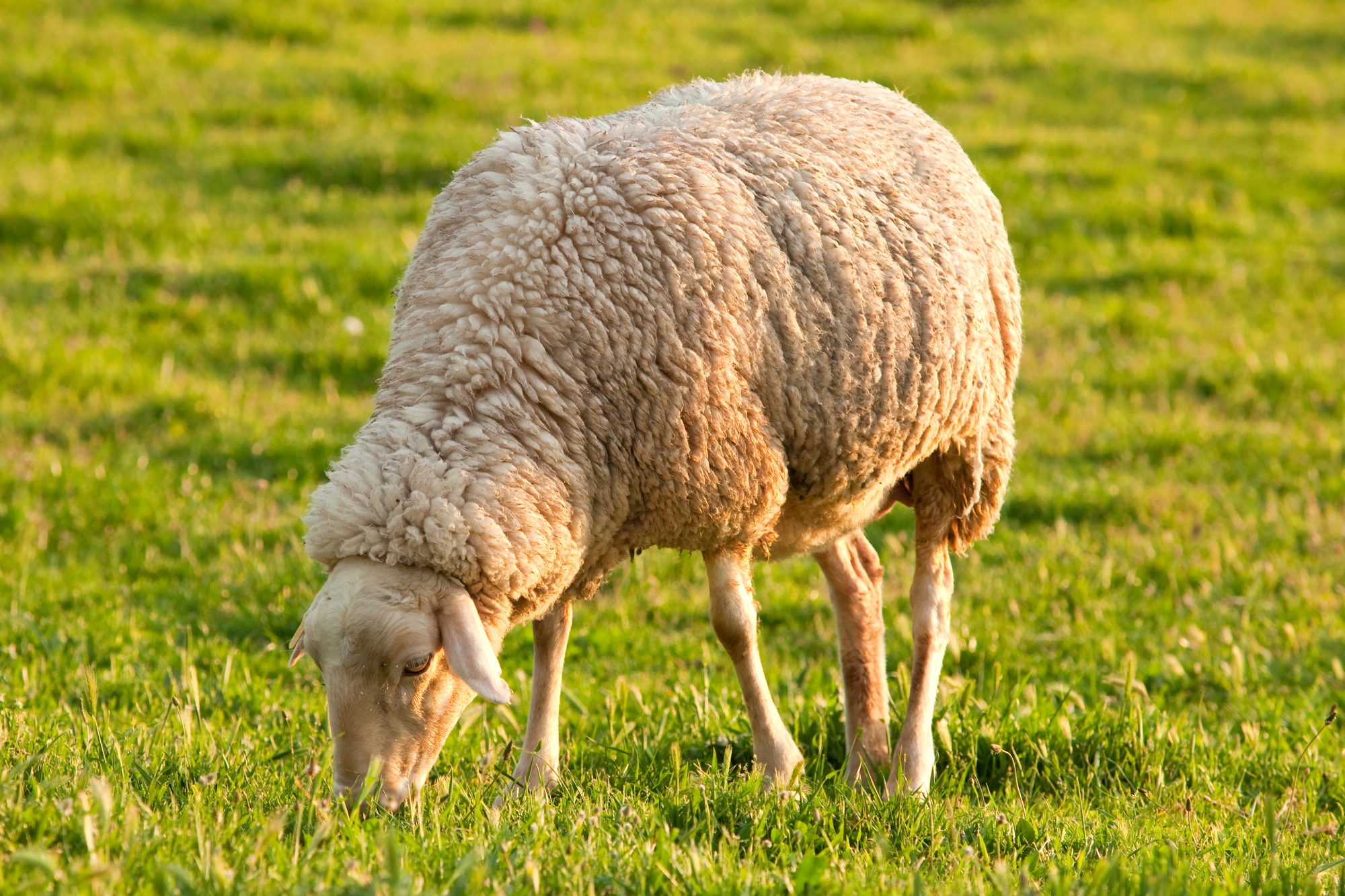 5 Ways to Keep Your Farm Animals Healthy With Feed Supplements for Livestock - Vittetoe. Inc. - Seventy-Six   NearSay