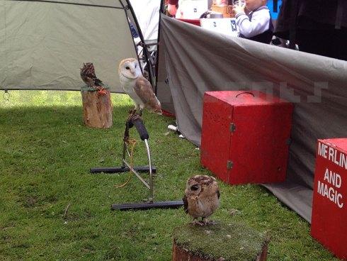 NEFest owls