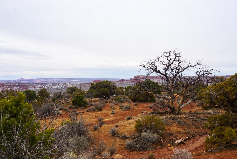 Desert Landscape in Arches National Park