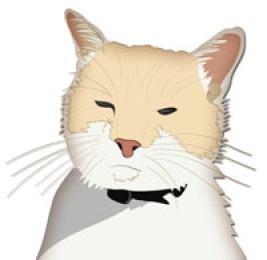 Dash Kitten Avatar