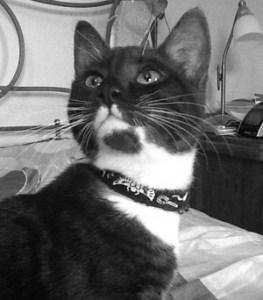 DashKitten.com Miranda Kitten Blogger
