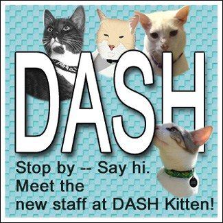 Team Dash Kitten Graphic