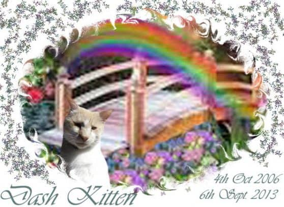 Dash Kitten Memorial Image 1