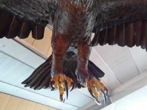 Wellington Airport Gandalf Eagles