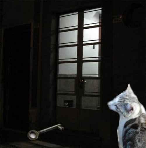 The Adventure Silver Kitten