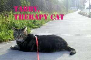 Tabby Therapy Cat