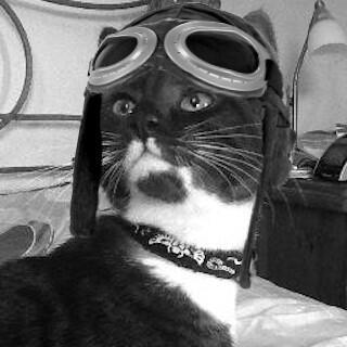 Miranda Kitten Image