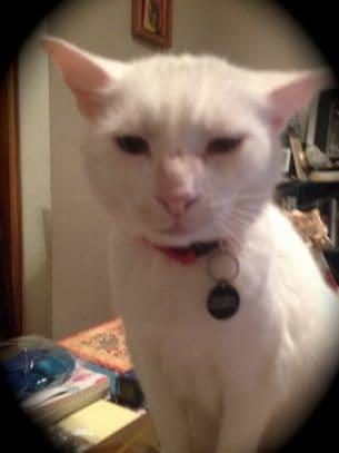 Harvey Button Cat