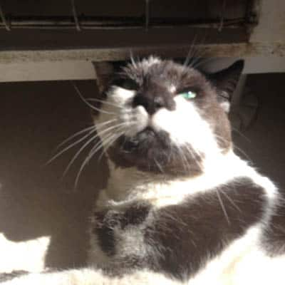 Arthur the FIV+ cat in Upper Hutt