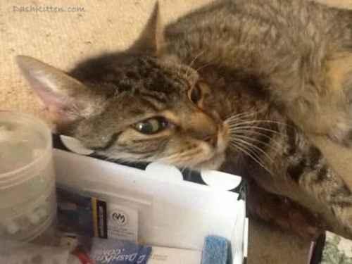 Senior Cat Nemo helps jewellery making