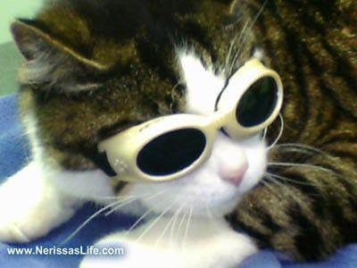 Nerissa The Cat @NerissaTheCat
