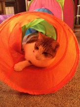 Cat in play tunnel