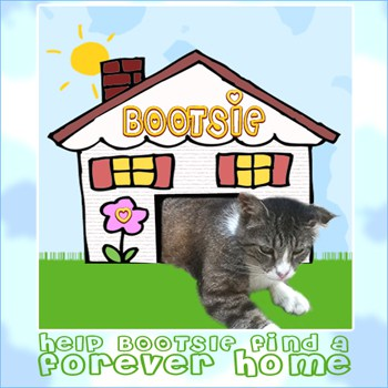Bootsie the Cat Needs A Forever Home (Facebook Size)