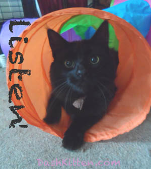 Phoebe the kitten cat from Dash Kitten