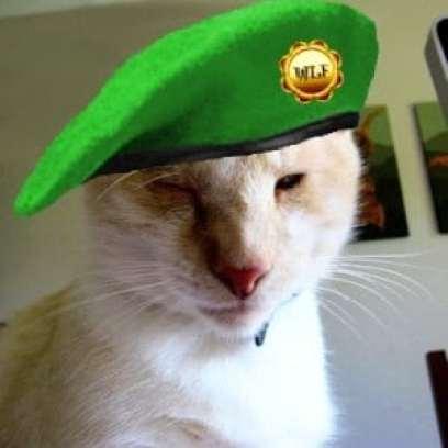 Dash Kitten in Beret #wlf