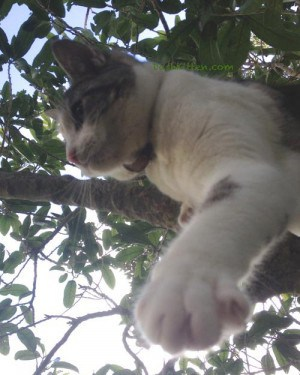 Silver Sunday Selfie at Dash Kitten