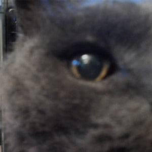 The eye of the cat looking at you and I