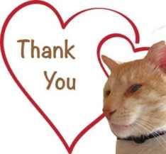 Thank You Graphic Dash Kitten