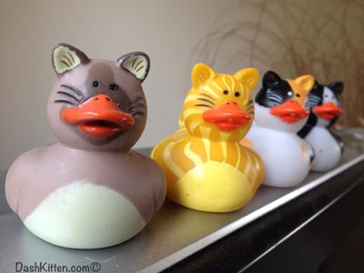 BlogPaws Ducks